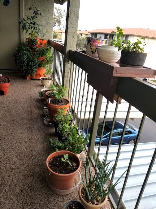Apartment balcony with an organic garden and worm farm