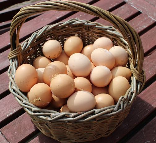 Fresh brown farm picked eggs with some straw on them. In a basket.