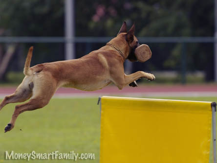 A dog jumping over a yellow hurdle.