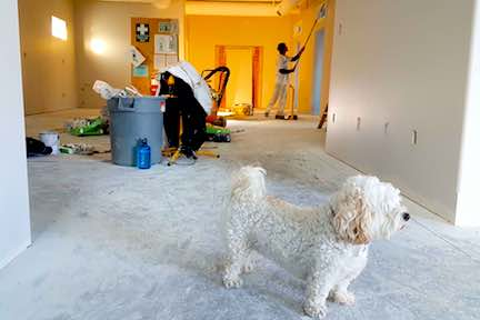 Painting the inside of an apartment with a white dog in the foreground.