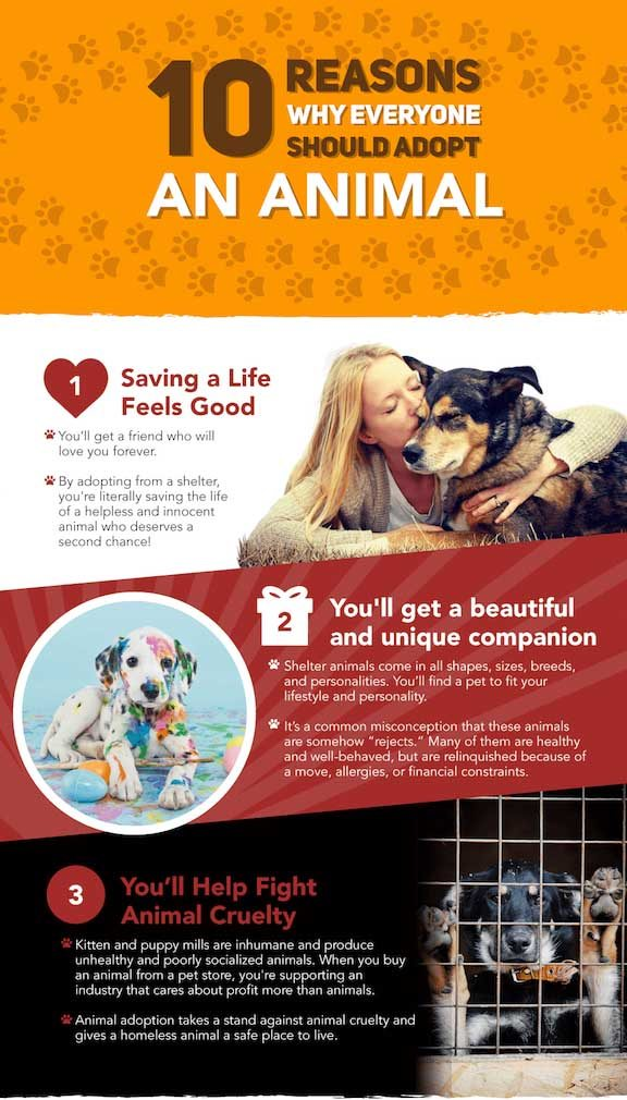 Pet Rescue Infographic 1