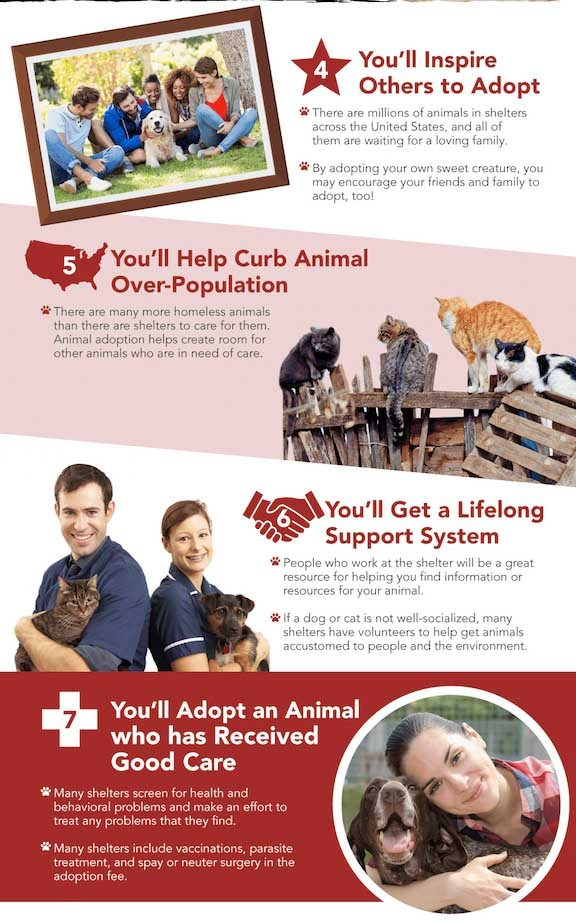 Pet Rescue Infographic 2