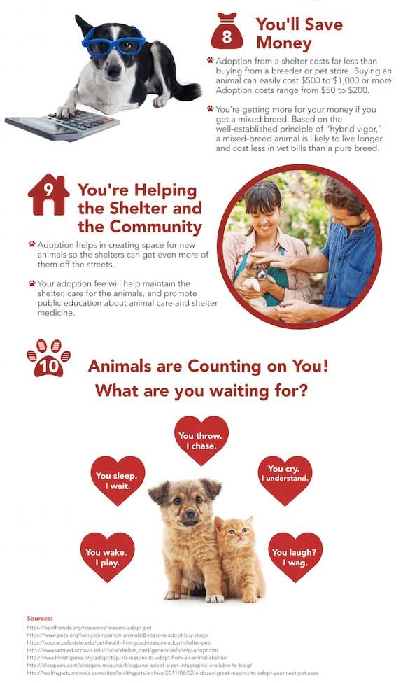 Pet Rescue Infographic 3