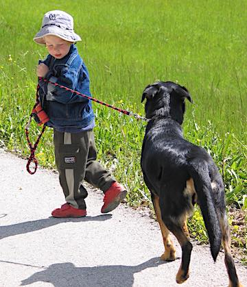 A young boy walking a dog.