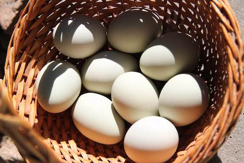 Fresh white eggs in a brown wicker basket.